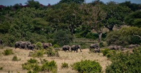 Tanzania-Tarangire_National_Park-014-DSC_6141