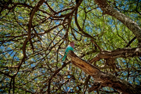 Tanzania-Tarangire_National_Park-015-DSC_6132