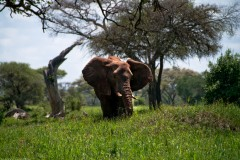 Tanzania-Tarangire_National_Park-018-DSC_6197