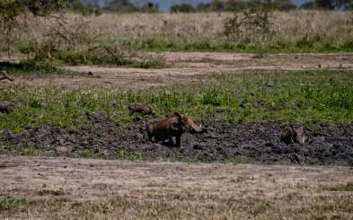 Tanzania-Tarangire_National_Park-019-DSC_6176