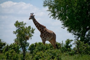 Tanzania-Tarangire_National_Park-021-DSC_6188