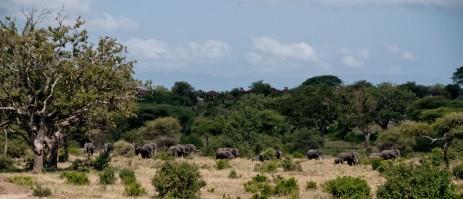 Tanzania-Tarangire_National_Park-022-DSC_6139