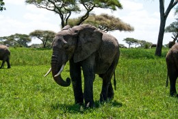 Tanzania-Tarangire_National_Park-024-DSC_6209