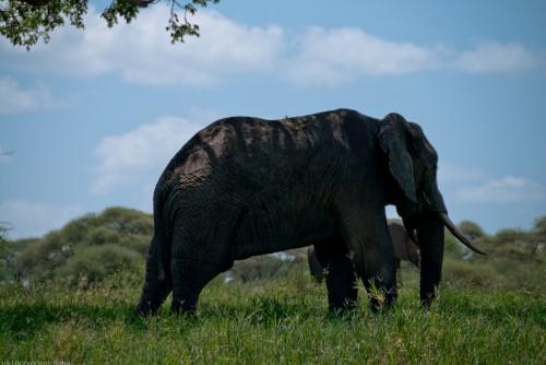 Tanzania-Tarangire_National_Park-025-DSC_6193