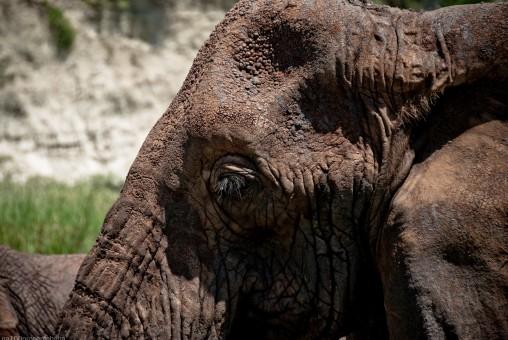Tanzania-Tarangire_National_Park-026-DSC_6248