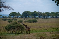 Tanzania-Tarangire_National_Park-028-DSC_6183