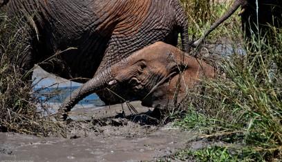 Tanzania-Tarangire_National_Park-029-DSC_6245