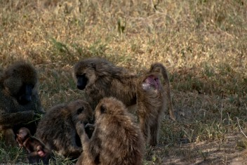 Tanzania-Tarangire_National_Park-030-DSC_6149