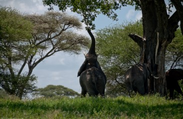 Tanzania-Tarangire_National_Park-031-DSC_6201
