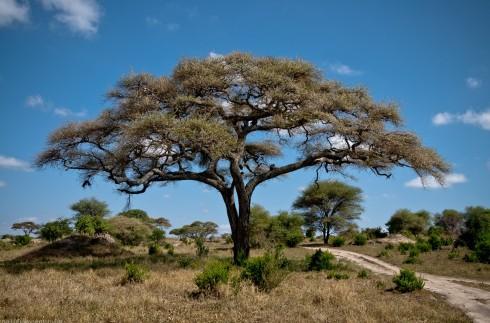Tanzania-Tarangire_National_Park-035-DSC_6147