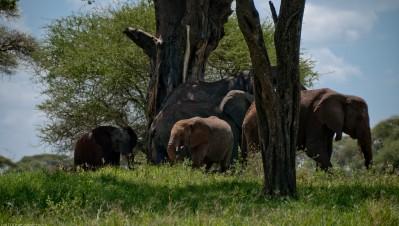 Tanzania-Tarangire_National_Park-036-DSC_6198