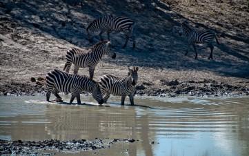 Tanzania-Tarangire_National_Park-037-DSC_6123