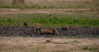 Tanzania-Tarangire_National_Park-038-DSC_6178