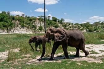 Tanzania-Tarangire_National_Park-040-DSC_6247