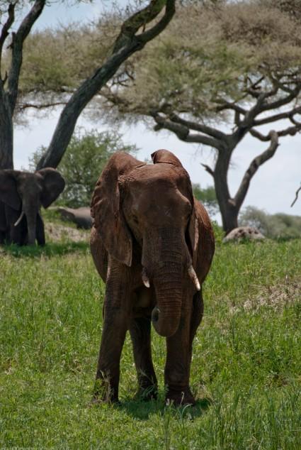 Tanzania-Tarangire_National_Park-041-DSC_6208