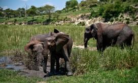 Tanzania-Tarangire_National_Park-043-DSC_6241