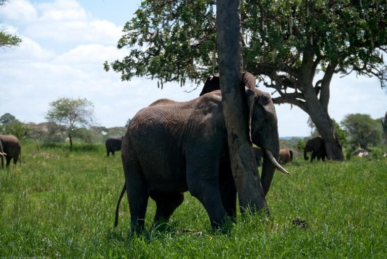 Tanzania-Tarangire_National_Park-047-DSC_6192