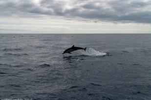 2016-02-08-13-Madeira-DSC_1795