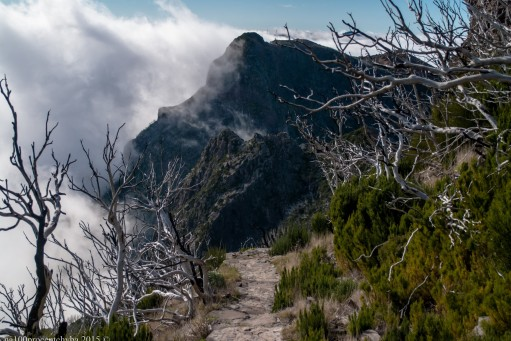 2016-02-08-13-Madeira-DSC_2510