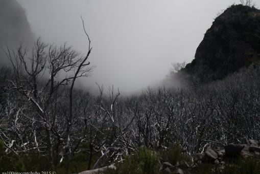 2016-02-08-13-Madeira-DSC_2522