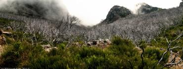dolina martwych drzew